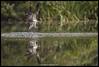 Soudley Osprey