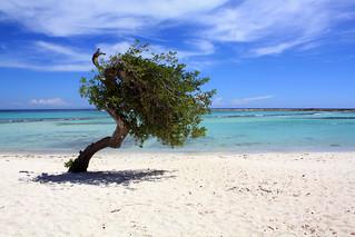 Baby Beach の画像. aruba beach caribbean tree summer 2010