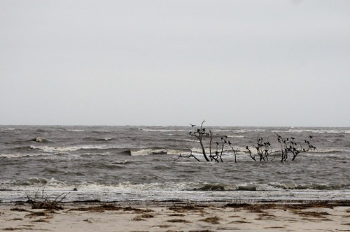 sapelo island cabretta beach dead tree tides ocean bird high tide water sky november autumn georgia golden isles birds landscape sand glass ga lonely