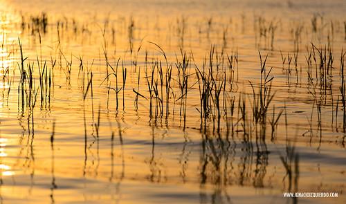 Kenya - Lake Baringo 09