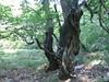 la frescura del bosco