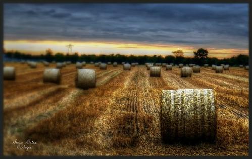 ireland sunset summer farm harvest straw crop bales roundbales fujifilmxe1 fujixe1