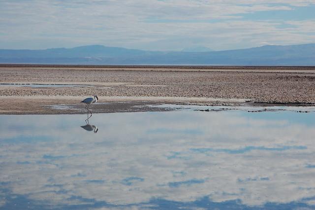 Laguna Chaxa/Salar de Atacama