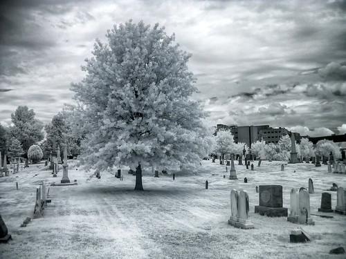 wallpaper bw tree cemetery grave landscape ir blackwhite congress infrared senators congressmen s30ir2
