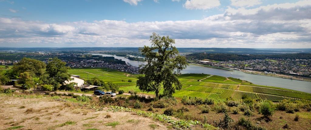 28. Rüdesheim am Rhein, en la región alemana de Hesse. Autor, Analox - Admiré