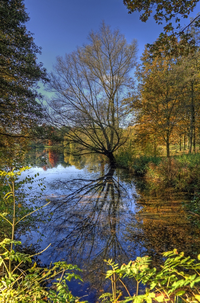 10. Reflejo de otoño en el lago. Autor, Bert Kaufman