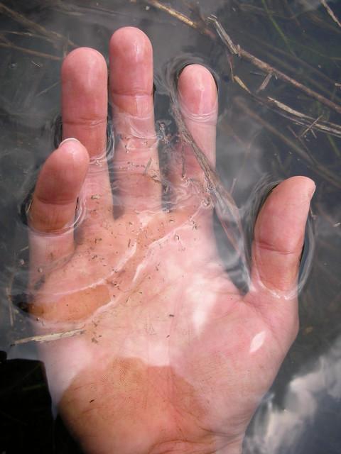 ヒキガエルに卵塊は細長い形をしている.