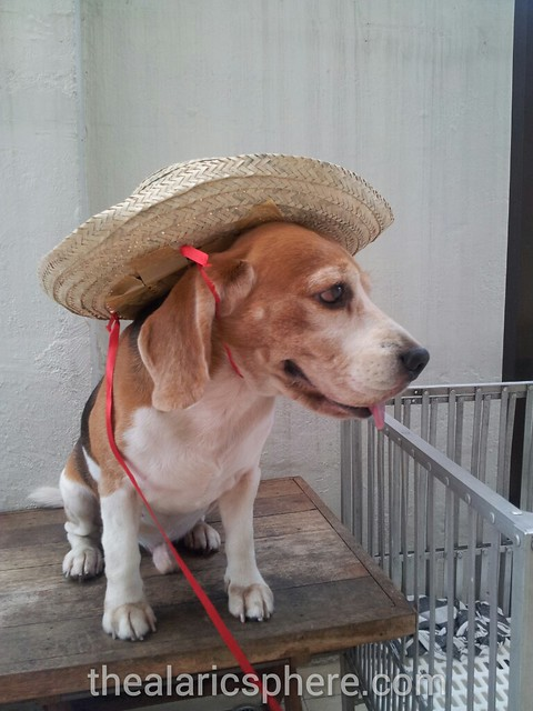 Dog-Beagle-Costume-Straw-Hat-Wearing