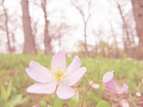 Sunny pink flower