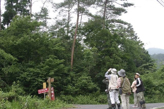 高い木の上にいるエナガやメジロの姿がよく見えた.