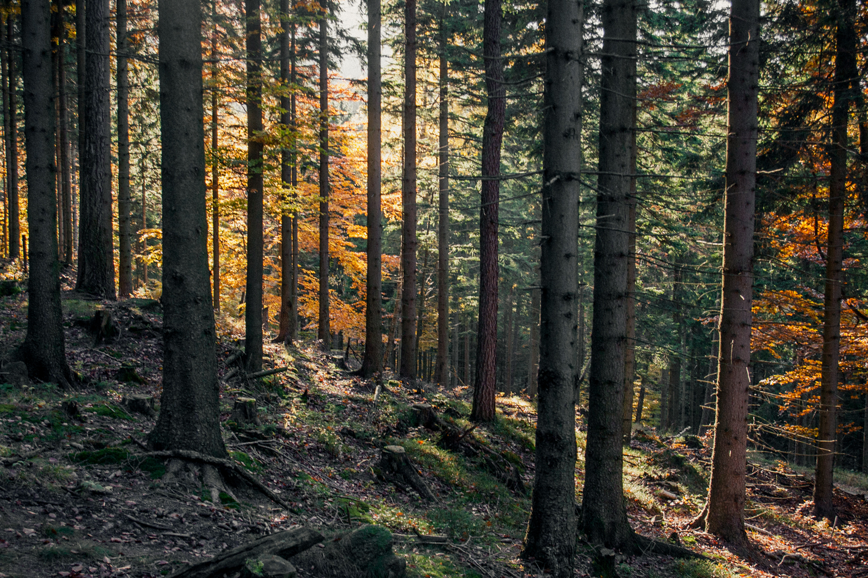 jesień-w-górach