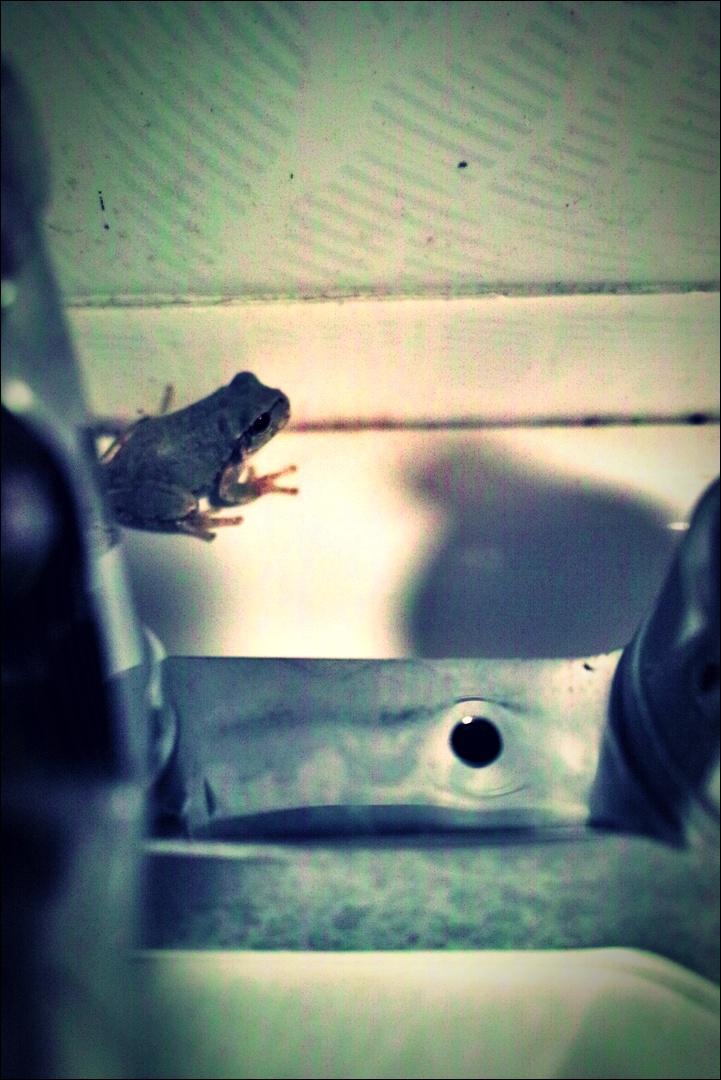 화장실 개구리-'경주 한옥 펜션 소요유'