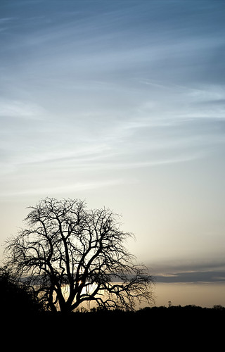 Silhouettes - Tree by targut