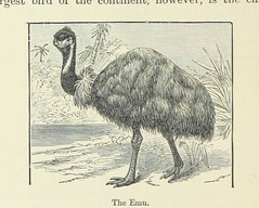 """British Library digitised image from page 114 of """"Chambers's Alternative Geography Readers. Standard IV. (-VII.)"""""""