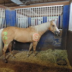 Arabian Nights Kissimmee - Painted Horse