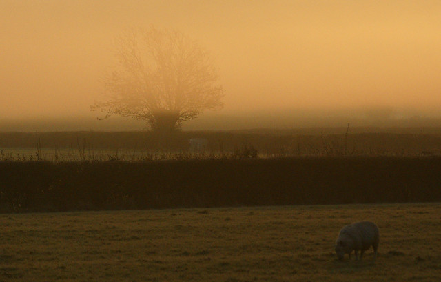 Mist at Dawn, Severn Valley, Gloucestershire