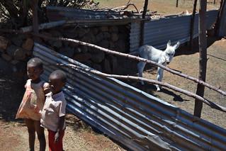 Lesotho Malealea 06 copyright Alexander G. Wiggert
