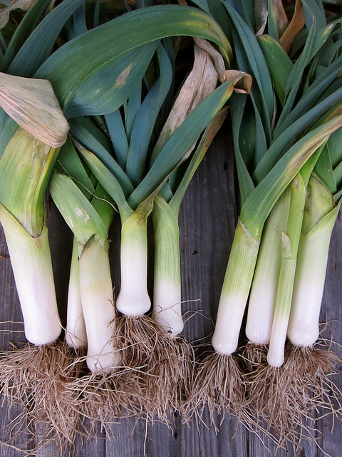 1.27.14 Winter Leeks