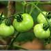 3837 - garden fresh