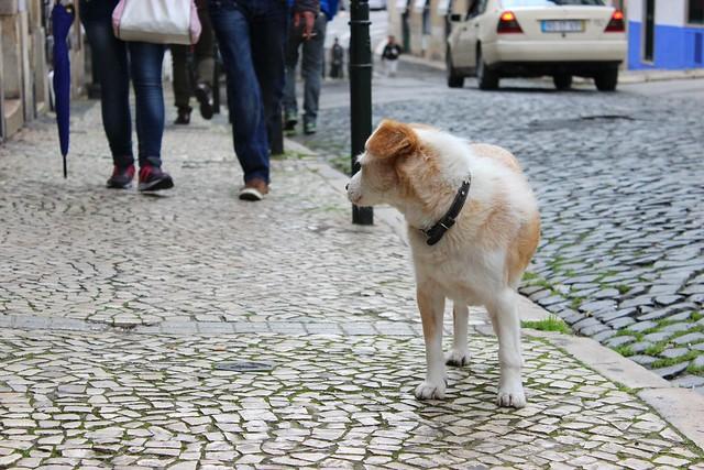 koira kadulla