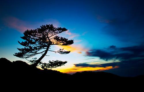 morning trees sky cloud sun india mountain colour nature sunrise landscape colours gorgeous hill darjeeling hilltop westbengal morningview sandakphu