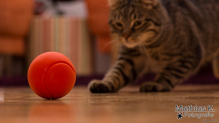 Mein Ball | Projekt 365 | Tag 51
