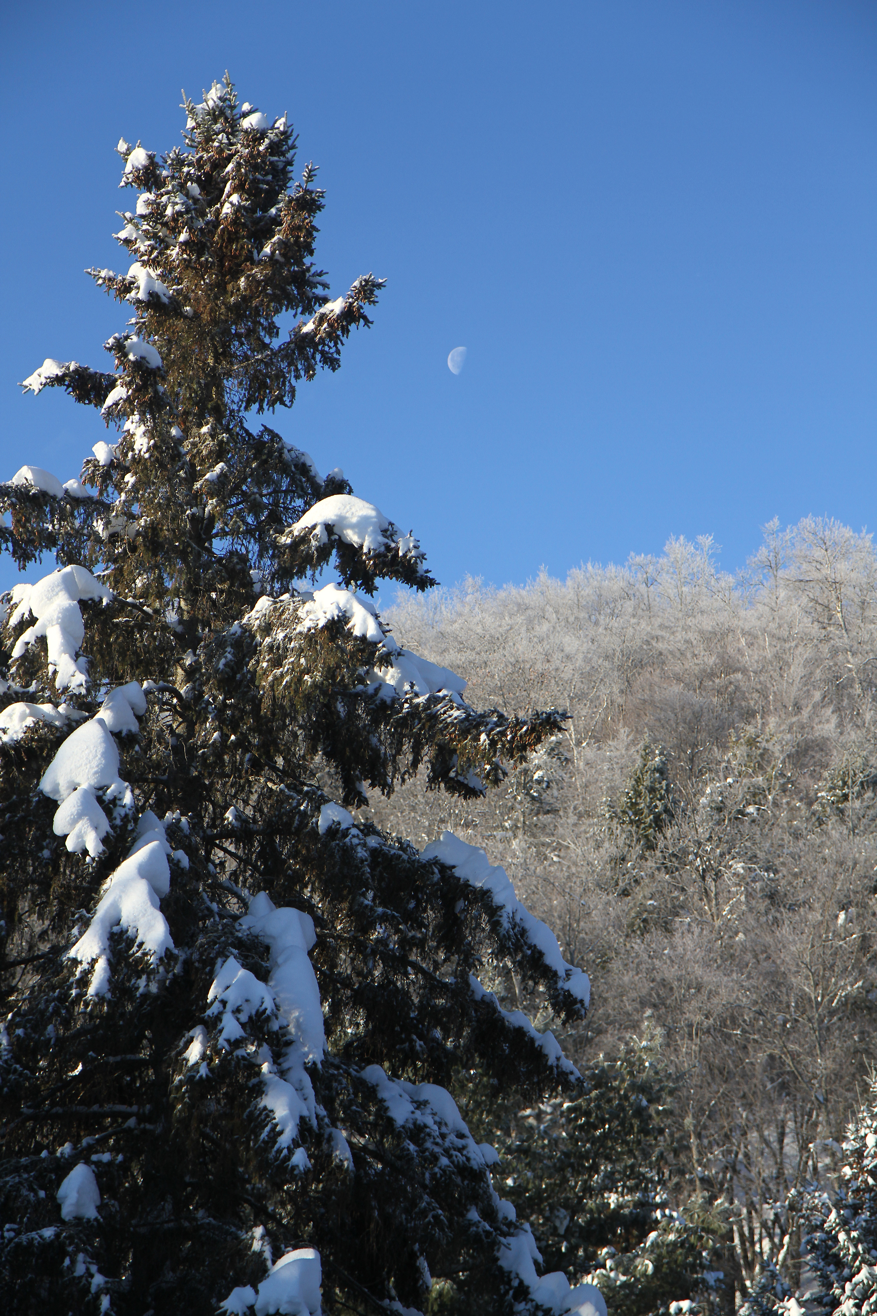Frosty Morning Moon