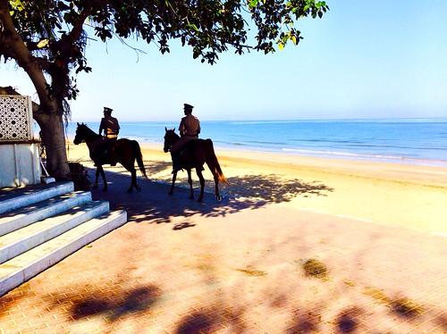 horses beach oman muscat