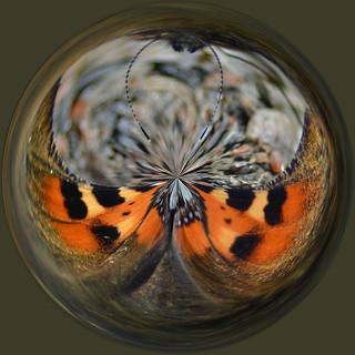 Butterfly-orb