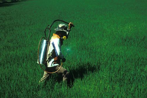 殺蟲劑噴灑。(來源:CGIAR)