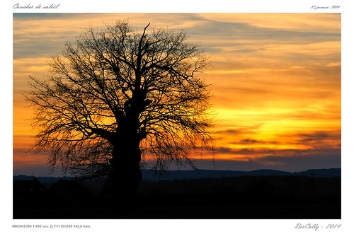 sunset sky france tree night clouds google flickr ciel nuages allier nuit arbre auvergne coucherdesoleil bercolly
