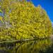 autumn Berlin by Skyline Image