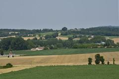 Champs de maïs ,de blé entre-coupés par des bois