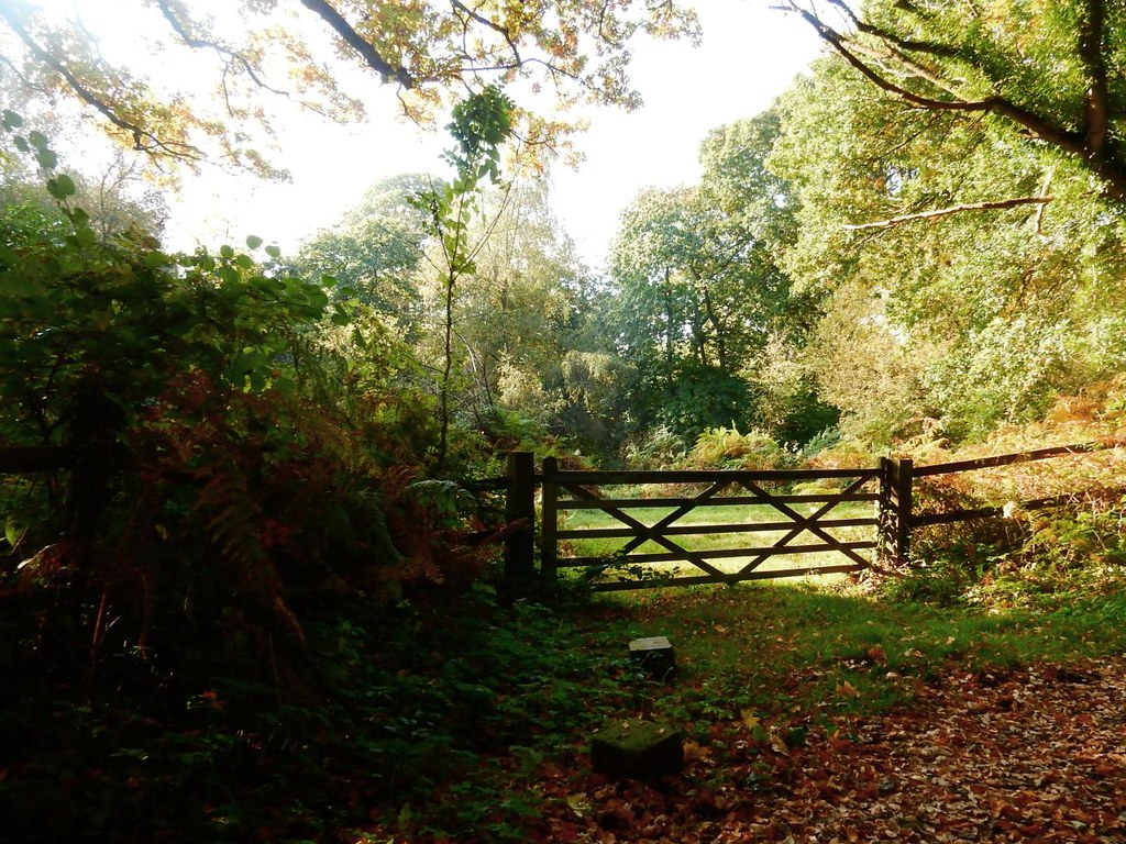 A gate Witley to Haslemere