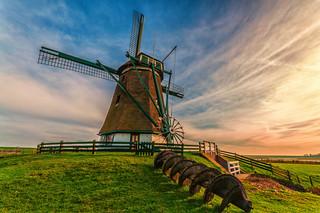 Texel 2011