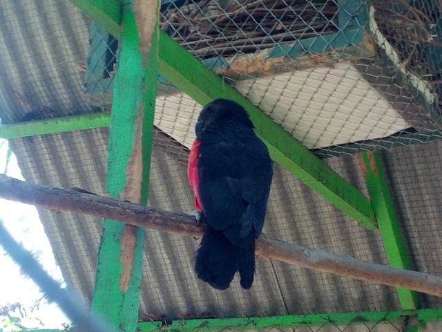 Попугай неизвестной породы :)