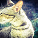cat by bibekthecrony