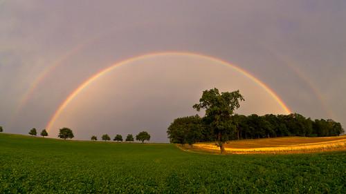 trees rain rainbow day fisheye explore atmosphericoptics atmosphericphenomena sigma10mmf28 canoneos550d