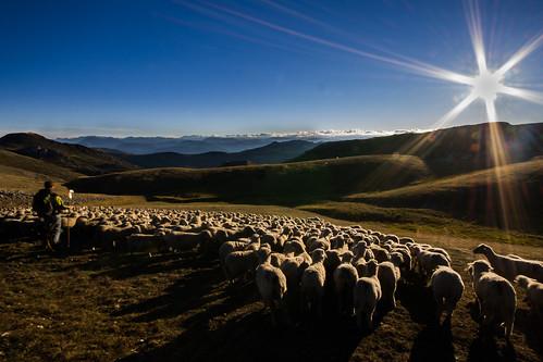 montagne landscape provence paysage moutons berger alpage troupeau chiran