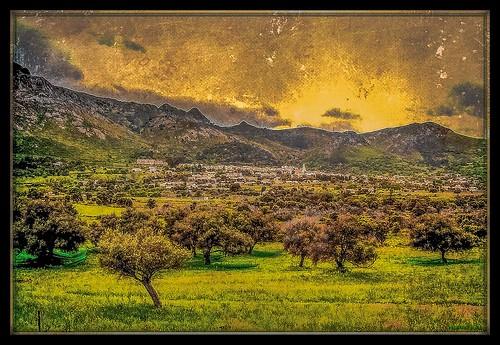 ZILIA by régisa