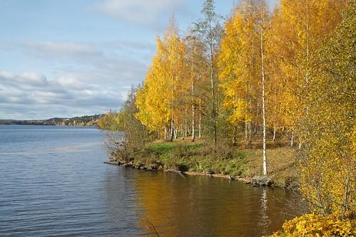 autumn lake tree fall water colors suomi finland koivu tampere vesi syksy hatanpää pyhäjärvi