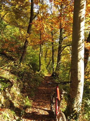 Herbst-Trails