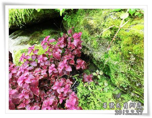 120227-晨宿裡的花草