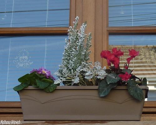 Composition en jardinière d'hiver