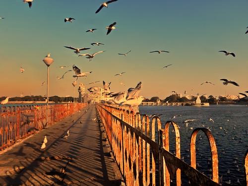 ocean sunset sea india lake seascape bird water birds landscape freedom evening bay twilight sundown dusk seagull gull flight lagoon arabian sanctuary gujarat waterscape jamnagar gujrat arabiansea lopamudra lopamudrabarman