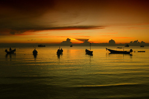 Thai Sunset (red green bicolor)