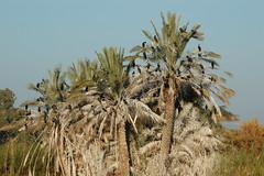 Ein Afeq Nature Reserve שמורת טבע עין אפק