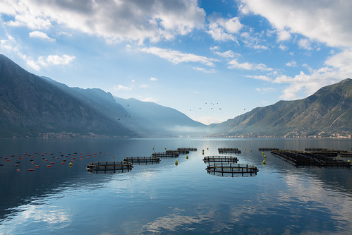 morning travel sea sky mist lake mountains reflection water birds misty clouds outdoors dawn bay outdoor horizon serbia cage calm adventure relaxation montenegro tranquilscene aquaculture kotor beautyinnature cageaquaculture