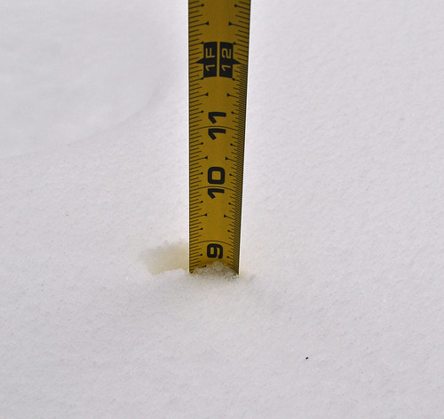 8.5 Inches