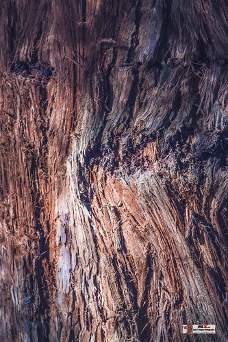 Monumento de los sequoias